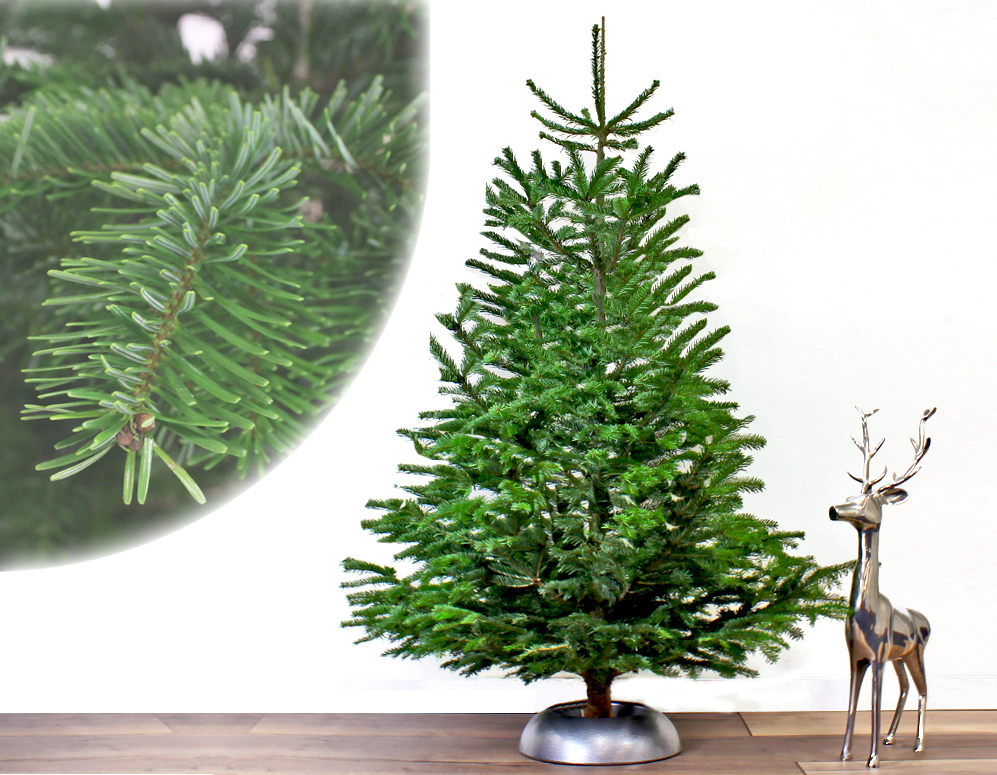 Click to Buy - A-Kwaliteit Nordmann Kerstbomen