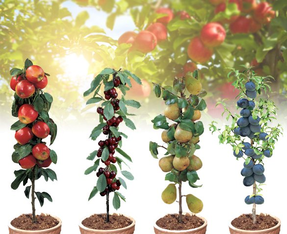 Groupdeal - Set van 4 Fruitbomen